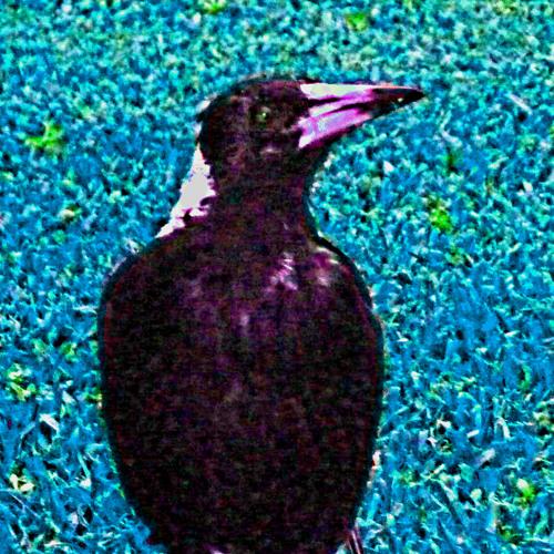 Birdbrain Blues [disquiet0085-3parts]
