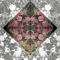 Starfucker - While Im Alive (Honest Remix)