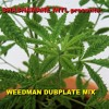 SHASHAMANE INTL WEEDMAN DUBPLATE MIX AUG 2K13