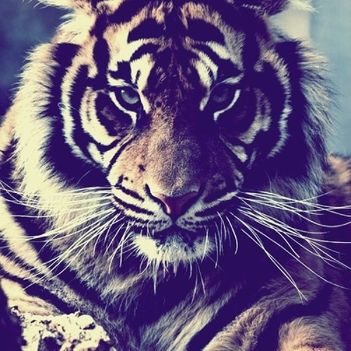 Textile Tiger