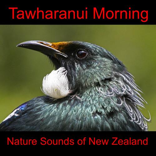 Tawharanui Morning