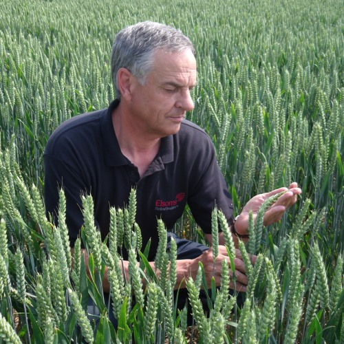 Elsoms Wheat Limited BBC Interview