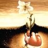 الإنسان والنبات | د. إبراهيم عبد الباقي أبو عيانة | علوم | حراء 31