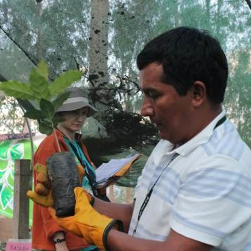 Peregrina Morgan: IPEBA intensificará certificación de productores cafetaleros en Selva Central