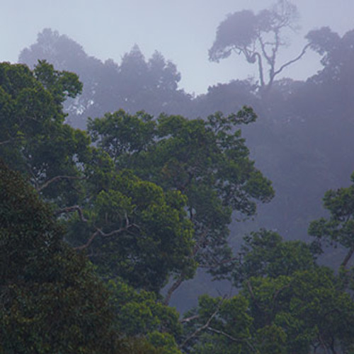 Storm in the Rainforest, Bukit Fraser, Malaysia