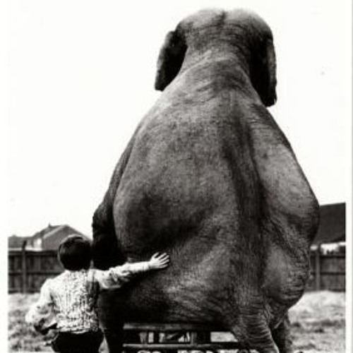 The Small Boy and the Elephant