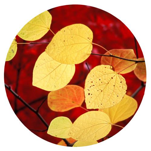 Yellow Leaves VIP
