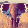 Benjamin Francis Leftwich - Butterfly Culture (Cuddlefish Bootleg) [Preview]