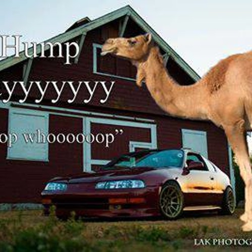 Humpstep Remix Geico Hump Day Camel Vs Zomboy Dirty Disco