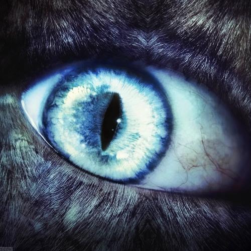 FIGURE - Werewolf (O'Neilly Remix)(Re-Edit)