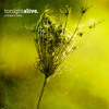 tonight-alive-lonely-girl-fearlessrecords