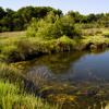 Sonidos de la naturaleza. Parque Natural S'Albufera des Grau, Menorca. Paisajes Sonoros 139
