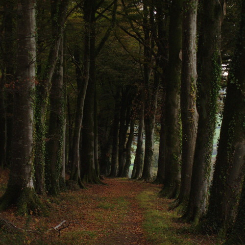 Bidwell's Path