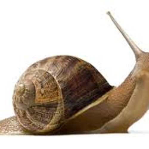 Snailbusters