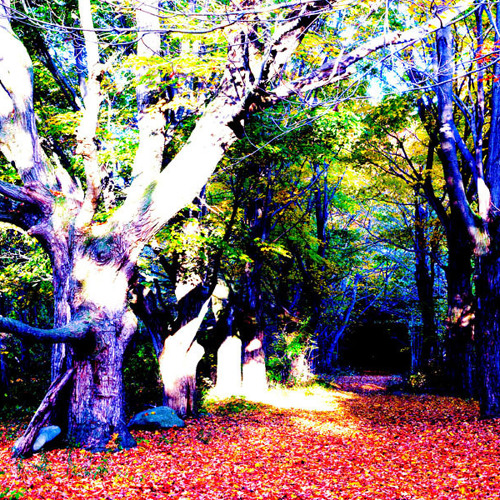 A Psychedellic Forest Experience