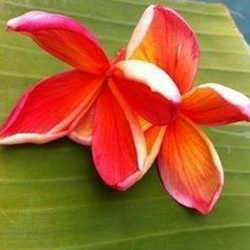 Tongan Love Song 2011 - LOTO TA'ETOLIA - Feauini 'o E Sopu 'o Taufa