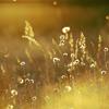 Eva Cassidy-Fields of Gold