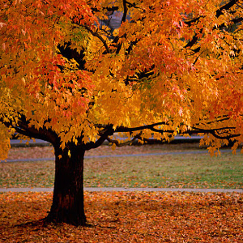 Feuille d'Automne by Alphone Hasselmans extract (live)