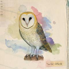 Aves de Chile -01- El Bosque