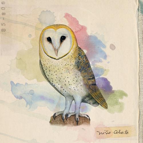Aves de Chile -03- La Muerte