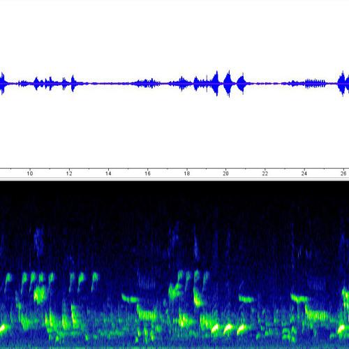 Dawn chorus, Rijeka, Croatia / album sample