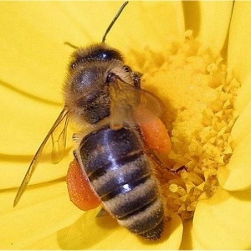Animal Awareness Minute - BEES - Mixdown