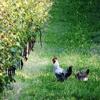 Biodynamics farming finds new fans