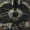 Raccoon Vol.2