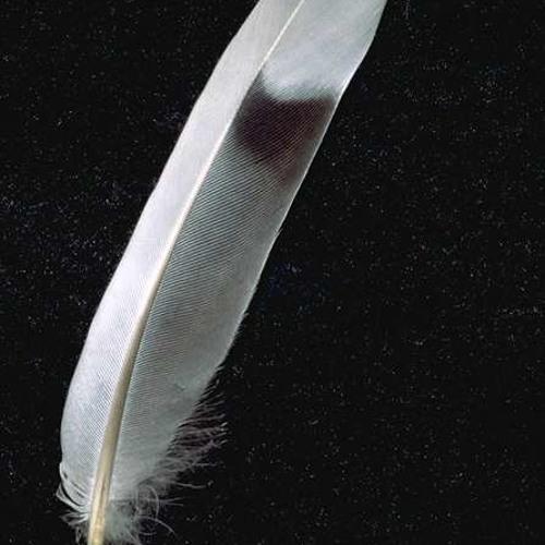 Wings of Sleep