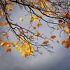 Download Autumn Leaves- Ed Sheeran Mp3