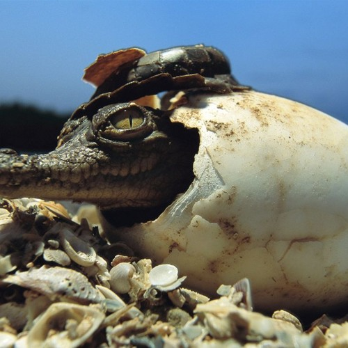 CrocodileSmile