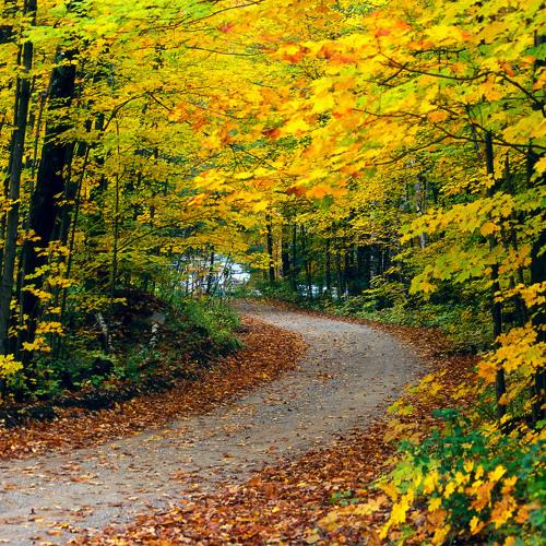 Autumn in Twente. Soprano, Alto, Tenor Recorders.