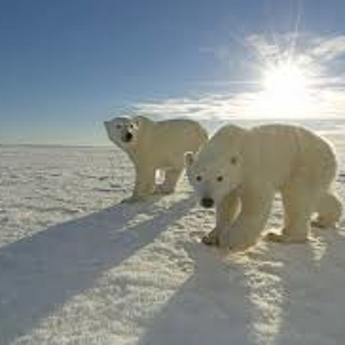 DJoii - Artic Life
