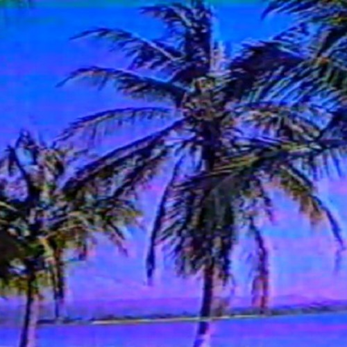 Palm dreams fltrd//