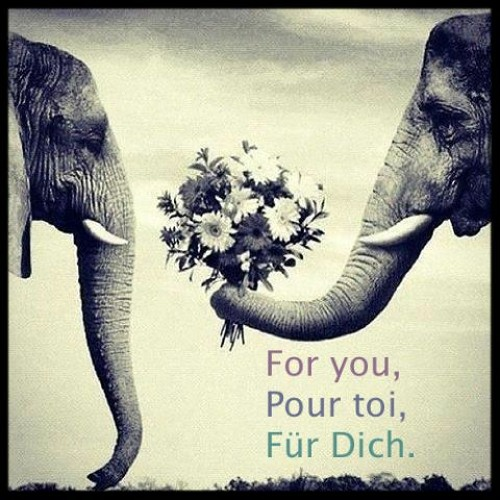For you. Pour toi. Für Dich.