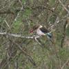 Busch am Tag, Kruger National Park, South Africa