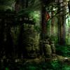 """Released on """"VA- Shamanic Visions of the Banyan Forest"""" Nioka-Ancient Forest"""