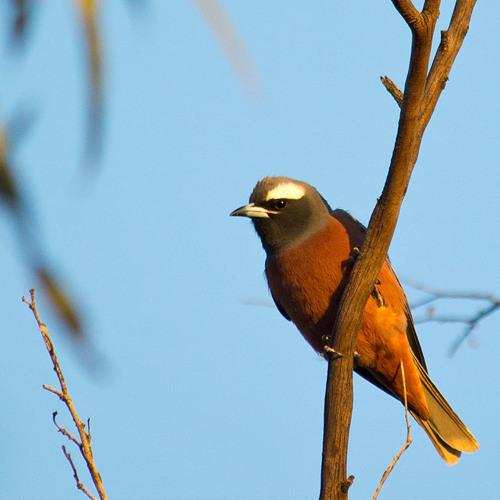 Nombinnie Spring, NSW, Australia
