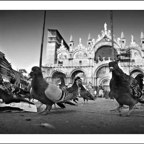 Una passeggiata per la Piazza San Marco