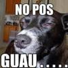 Culo pitbull ft Dj-Zeus circuit DEMO 2013 ++++