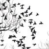 Lullaby of Birdland - Manu Manzo (Sarah Vaughn cover)