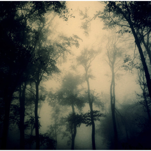Murdah J Productions | In The Forest Pt. II