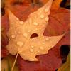 Gi0vanni Marradi Autumn Wind