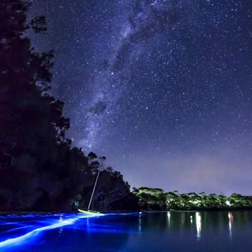 CoaGoa - Bioluminescent Bay
