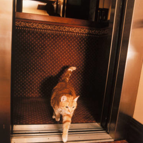 Classy Kitty rides Smooth Elevator