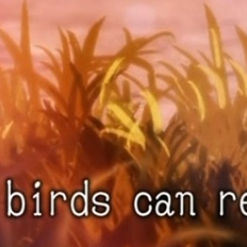Little Birds Can Remember