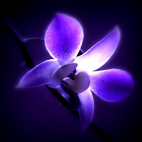 Wildwood Flower - Cover by John Lehaney & Juleah