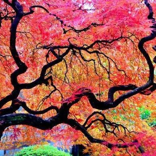 "Tree of Life 2014-""Autmen leaves"" 138bpm"