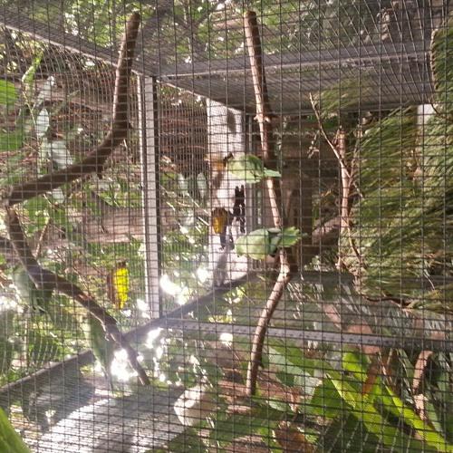papageien at Loro Parque