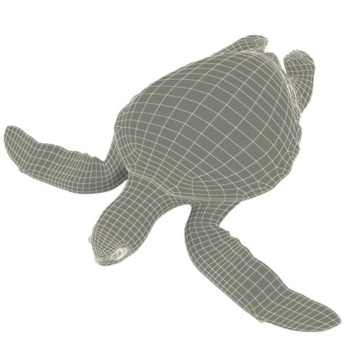 Turtle Dub
